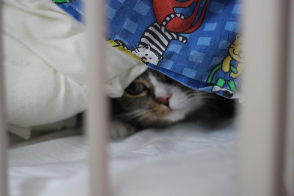 Katten Bengtsson