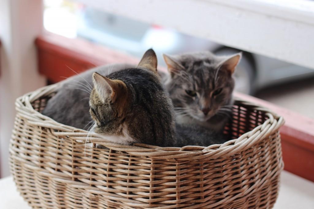 Katterna ligger i korgen