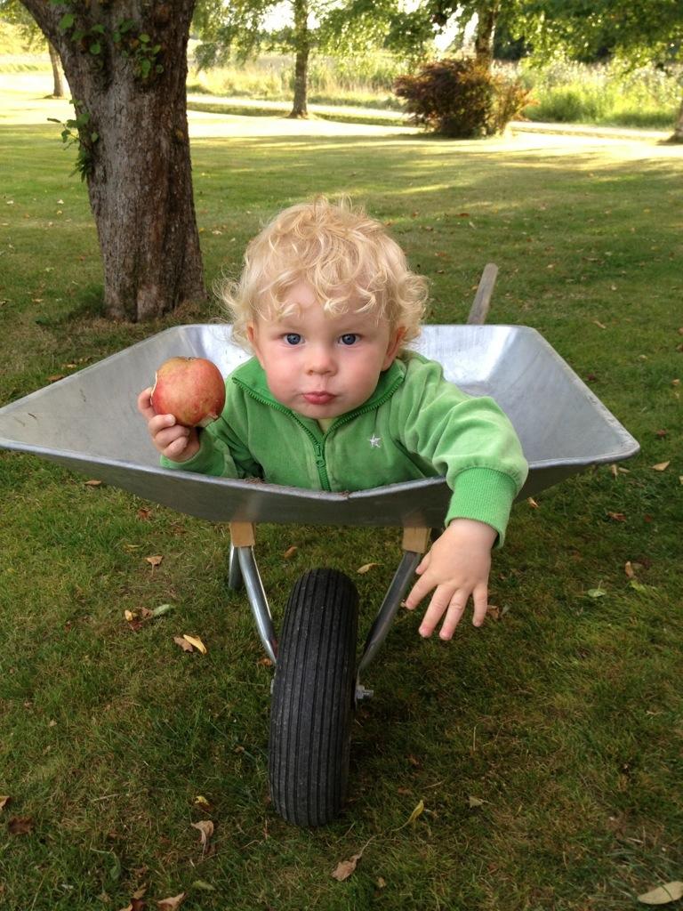 Ivar ligger i skottkärran och äter äpple.