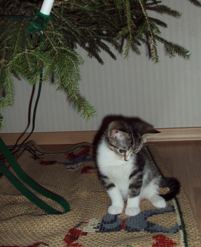 Bengtsson sitter på julgransmattan. Det är julen 2011 och kissarna är två månader gamla.